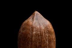 Взгляд макроса на гайке пекана изолированной на черной предпосылке Стоковая Фотография RF