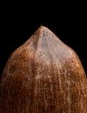 Взгляд макроса на гайке пекана на черной предпосылке Стоковые Изображения RF