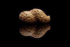 Взгляд макроса одного всего арахиса изолированного на черной предпосылке Стоковое Изображение