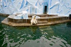 взгляд медведя приполюсный Стоковая Фотография