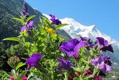 Взгляд Монблана от долины Шамони через цветки Стоковые Фотографии RF