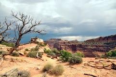 Национальный парк Canyonlands Стоковые Фото