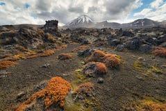 Взгляд национального парка Tongariro и Mt Ngauruhoe с красочным g Стоковая Фотография