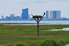 Взгляд на Атлантик-Сити Стоковые Фотографии RF