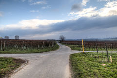 Взгляд над виноградниками в Hochheim, Германии стоковое изображение