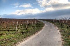 Взгляд над виноградниками в Hochheim, Германии Стоковое фото RF