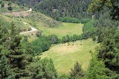 Взгляд на выгоне коров в горах Стоковые Изображения