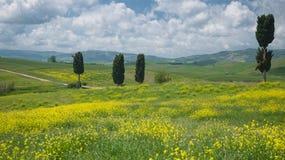 Взгляд на кипарисах в широком тосканском ландшафте Стоковое Изображение RF