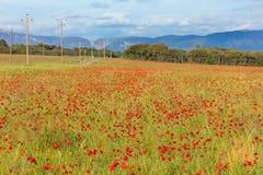 Взгляд на красном поле маков Стоковое фото RF