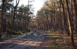 Взгляд на дороге в лесе Стоковая Фотография RF