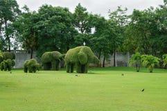 Взгляд на парке в Таиланде с кустом слона Стоковое Изображение