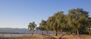 Взгляд над рекой Zambezi стоковое изображение rf