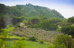 Взгляд на среднеземноморском винограднике Стоковые Фотографии RF