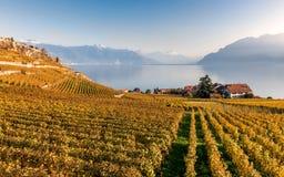 Взгляд на террасах виноградника в Lavaux, озере Женев и горах Альпов Стоковые Фото