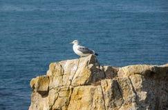 Взгляд на чайке Стоковые Изображения
