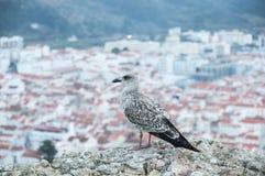 Взгляд на чайке Стоковые Фотографии RF