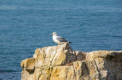 Взгляд на чайке Стоковое фото RF