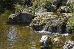 Взгляд на чистой воде в японском саде Стоковые Изображения