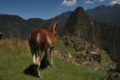 Взгляд над Machu Picchu Стоковые Фото