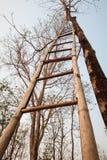 Взгляд низкого угла бамбуковой лестницы Стоковые Изображения RF