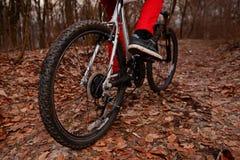 Взгляд низкого угла горного велосипеда катания велосипедиста на следе на восходе солнца в лесе Стоковое Изображение