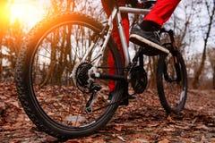 Взгляд низкого угла горного велосипеда катания велосипедиста на следе на восходе солнца в лесе Стоковая Фотография RF