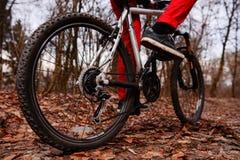 Взгляд низкого угла горного велосипеда катания велосипедиста на следе на восходе солнца в лесе Стоковое фото RF