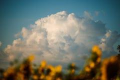 Взгляд низкого угла голубого неба Стоковое Изображение RF