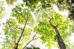 Взгляд низкого угла леса Стоковое Изображение