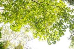 Взгляд низкого угла леса Стоковое Изображение RF