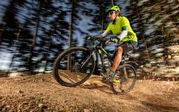 Взгляд низкого угла катания велосипедиста горы на следе Стоковое Изображение RF