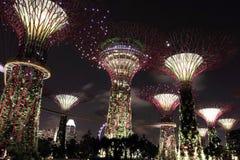 Взгляд ночи рощи Supertree стоковое изображение