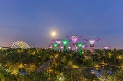 Взгляд ночи сада заливом Сингапуром Стоковые Фото