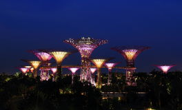Взгляд ночи садов заливом в Сингапуре Стоковые Изображения RF