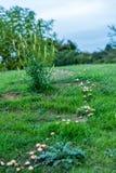 Взгляд дня линии пути гриба в древесинах Стоковое Фото