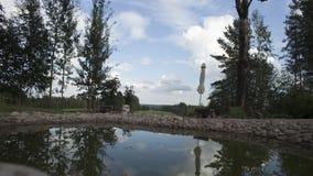 Взгляд дня прошел мимо на пруд в парке зеленые валы Природа Заход солнца Timelapse видеоматериал