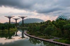 Взгляд дня рощи Supertree Стоковые Изображения