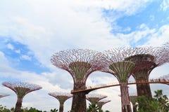 Супер деревья в садах заливом Сингапуром Стоковая Фотография RF