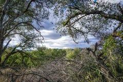 Взгляд обрамленный дубами Topanga стоковое изображение rf