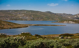 Взгляд озера в лете в Норвегии Стоковая Фотография RF