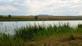 Взгляд озера видеоматериал