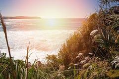 Взгляд океана от скачком побережья с травой стоковая фотография