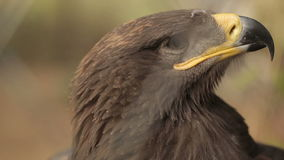 Взгляд орла вокруг сток-видео