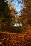 Взгляд осени Colorfuly в лесе с упаденными листьями Стоковая Фотография RF