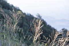 Взгляд от верхней части самой высокой горы в Таиланде Стоковые Изображения RF