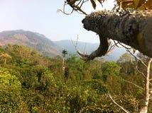 Взгляд от вершины плодоовощ стоковое фото rf