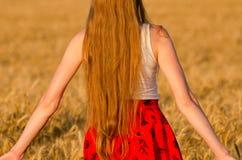 Взгляд от задней части девушки с длинными волосами в пшеничном поле Стоковое фото RF