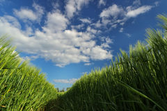 Взгляд от земли в поле Стоковые Фотографии RF