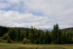 Взгляд от моста гор Темные ые-зелен наклоны и холмы Карпатов Славный взгляд гор над красивейшими облаками птиц цветы раньше летаю Стоковое Фото
