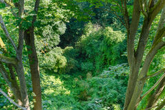 Взгляд от сени treetop Стоковые Изображения RF